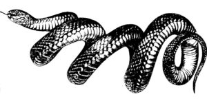 About Snakes