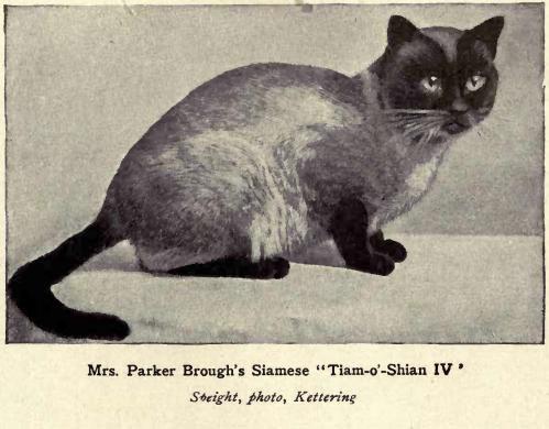 Parker Siamkatze