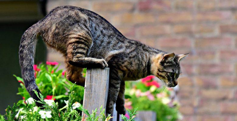 Katze Garten