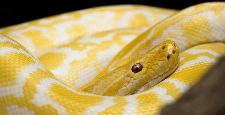 Schöne Schlangen